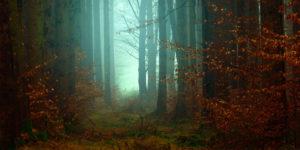 foresta-1