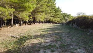 Trail running monterosso